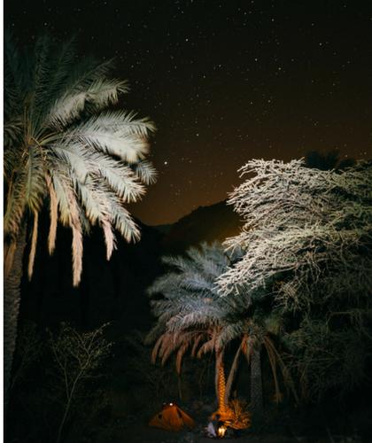 Zeltplatz unter Sternen und Palmen, Oman