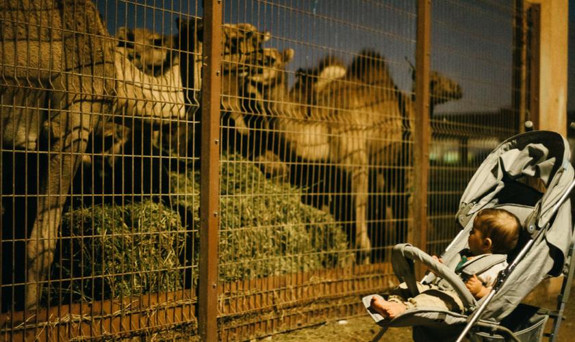 Baby auf Kamelmarkt, Al Ain, UAE